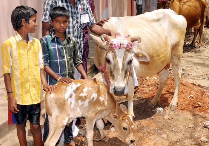Aadhaar Cows