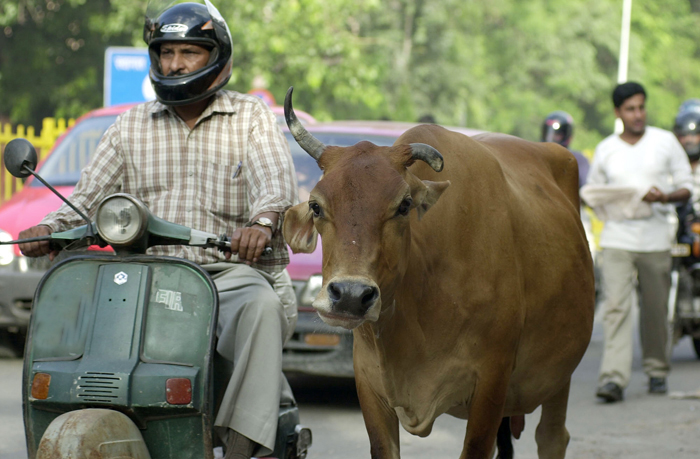 Cow Start up