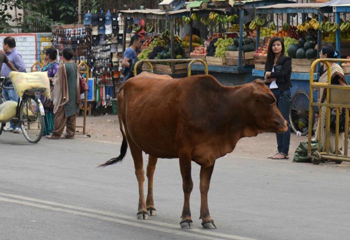Cow Protectors