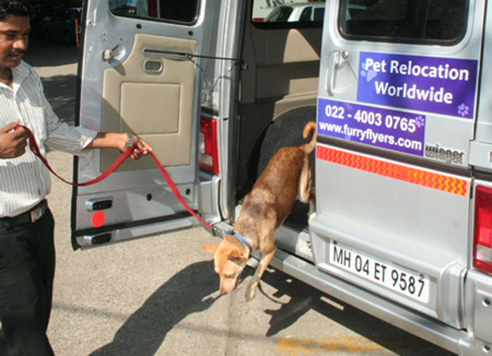 Mumbai Cab Service for Pets