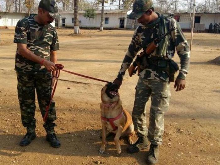 Cracker a CRPF patrol dog