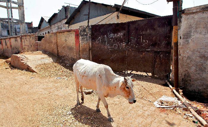 Beef Crackdown