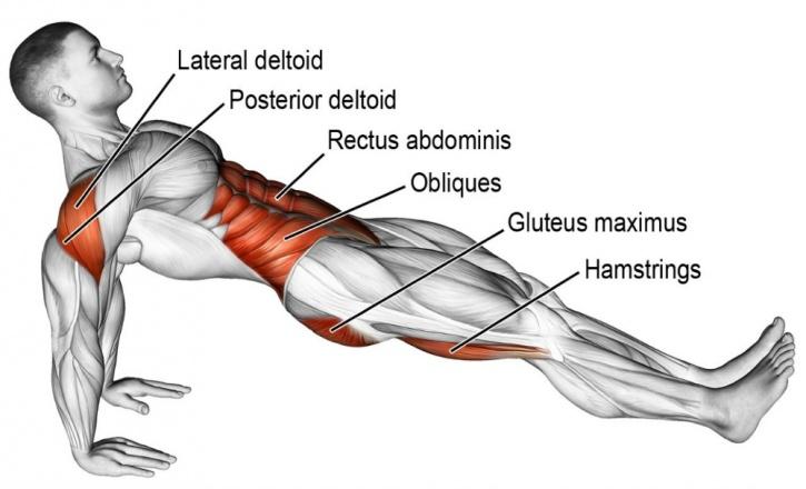 Reverse plank benefits