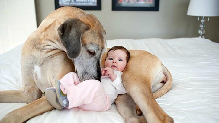 Dogs benefit unborn babies