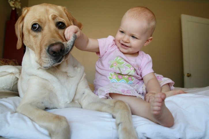 children born into households that have pets, 70 per cent of which were dogs, have better levels of two strains of bacteria: one that is linked to a decrease in a risk of obesity and one that is linked to protection against childhood allergic diseases.
