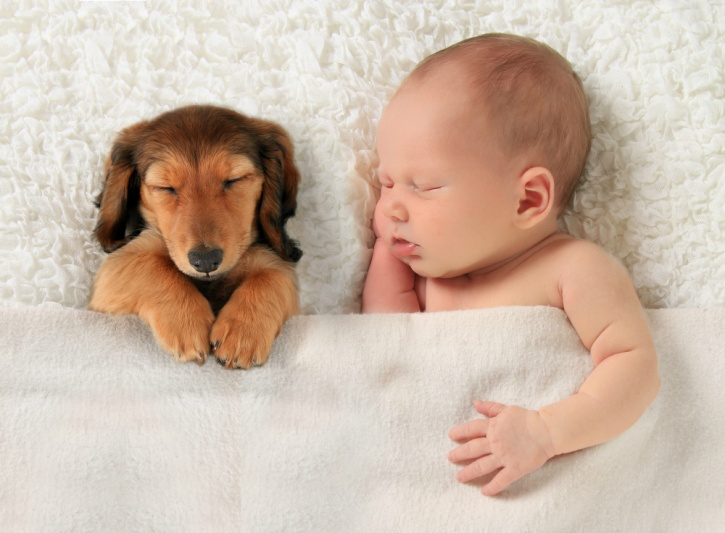 your kid is likely to benefit from prenatal exposure once you get back from the hospital even if your dog around is not around