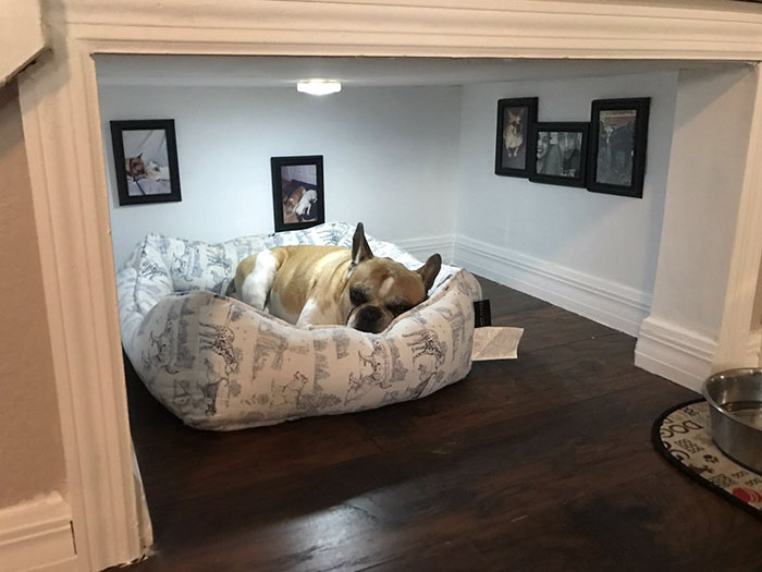 dog gets bedroom under the stairs