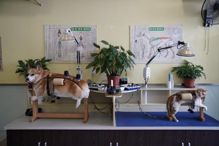 Acupuncture For Cats And Dogs