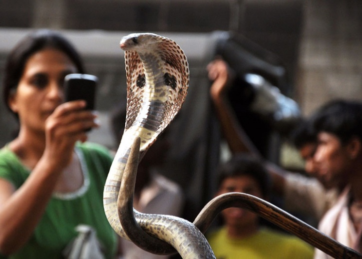 Women set snake free in UP jeweller