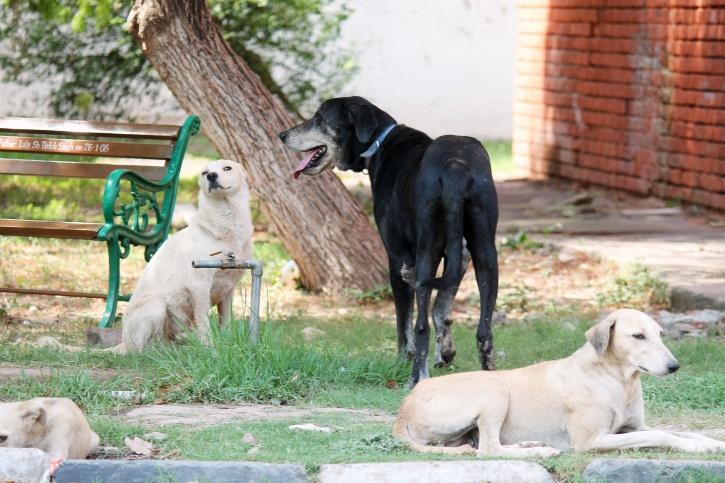 Dogs eat up patient