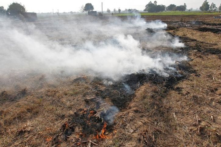 Alarmed By Delhi Air Pollution Farmers Quit Stubble Burning