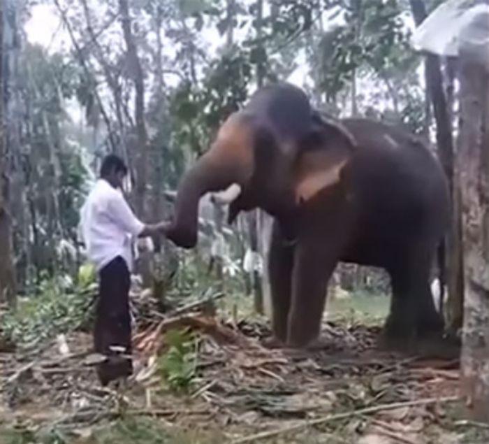 Bahubali stunt