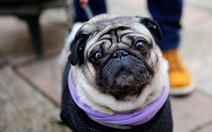 Dog Named Trump Kidnapped In Delhi Police Hunt For Accused