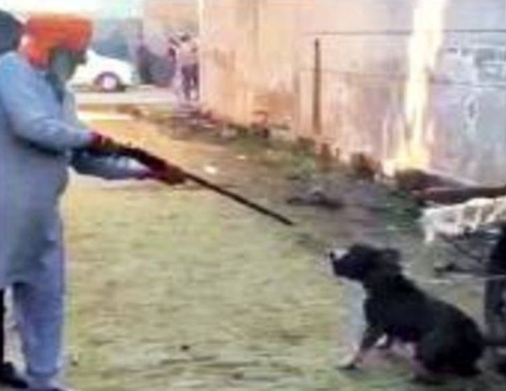 Ex-Armyman Uses Rifle To Shoot Chained Dog