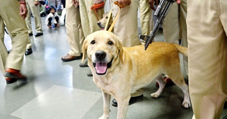 Explosive Detector Can Take Place Of Sniffer Dogs