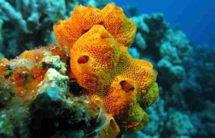 Humble Sponges