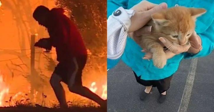man saves rabbit/biker rescues kitten