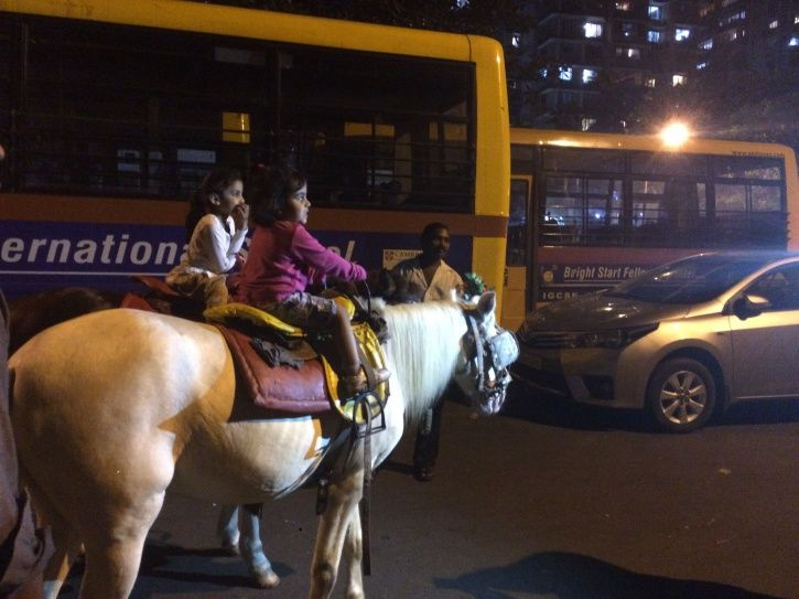 Movement of Horses Mules Restricted In Delhi After Epidemic Outbreak That Could Affect Humans Too