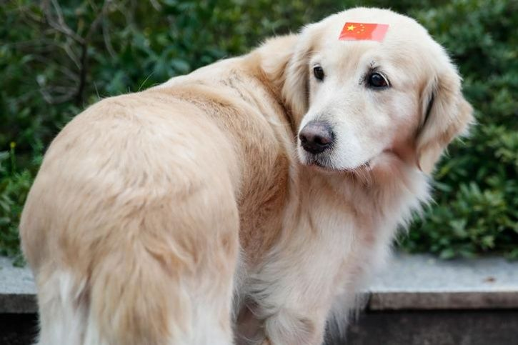 Poisoned Syringes Sold In China That Kill Dogs