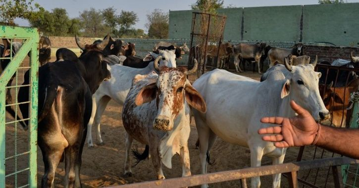 Suspected Cow Smuggler Killed In Encounter