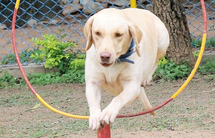 Dog Police
