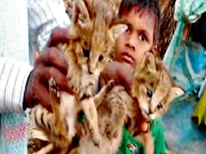 Boy brings home leopard cubs