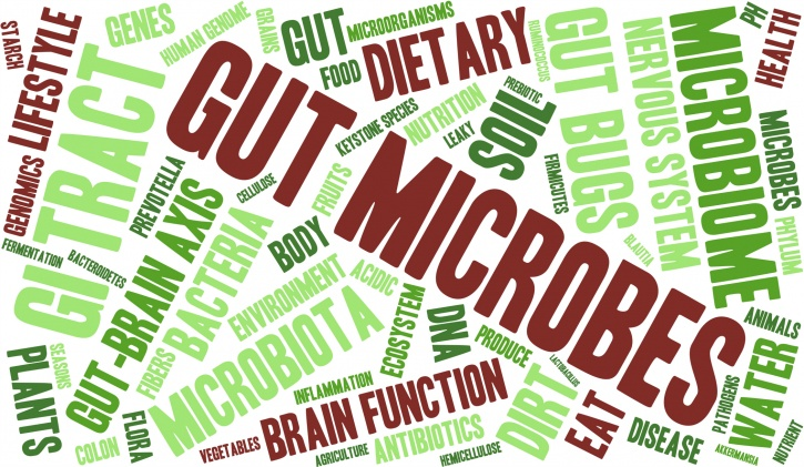 Researchers from Lund University in Sweden on gut bacteria