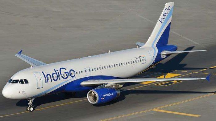IndiGo To Transport Bodies