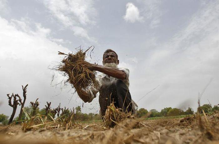 farmer monsoon