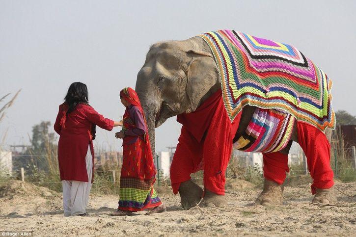 Elephant sweaters India DailyMail