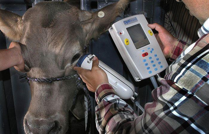 Cow ID
