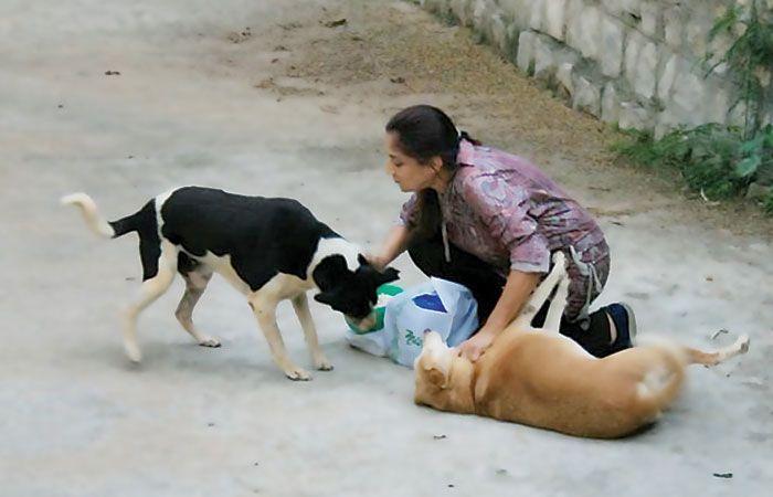 Women Feed Stray Dogs