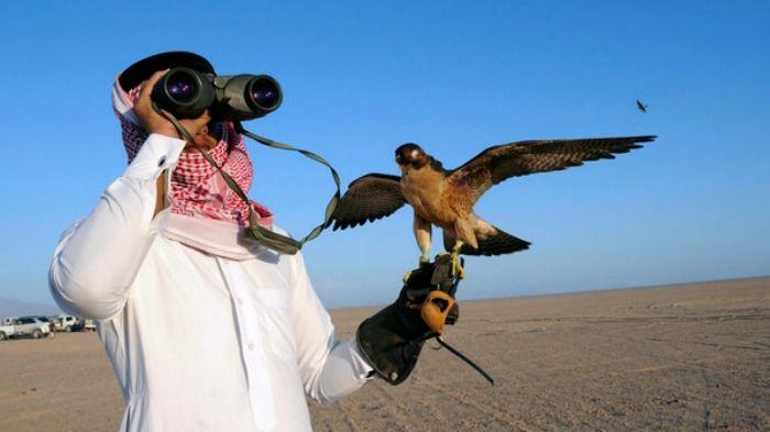 representative image- falcon