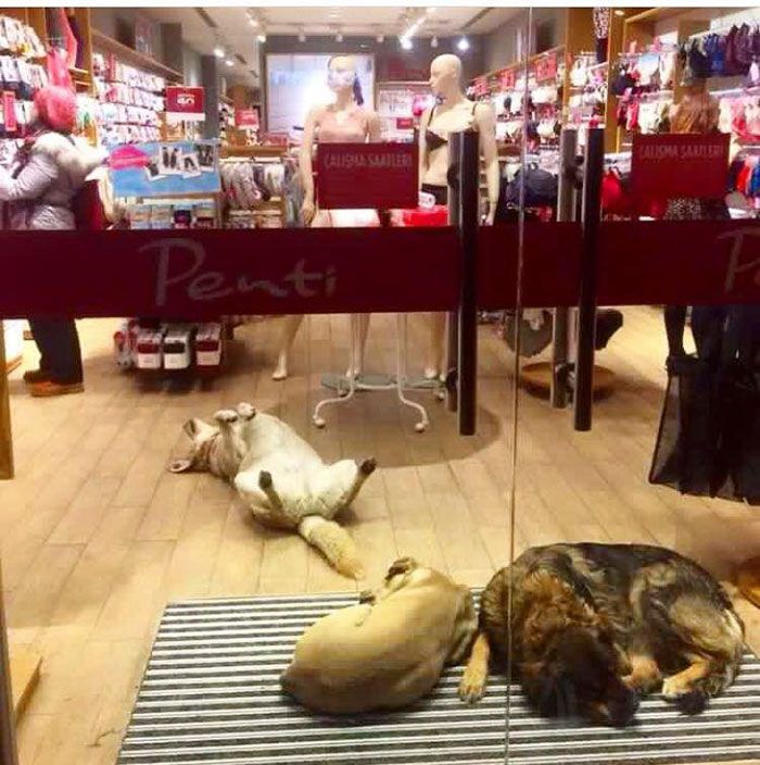 Istanbul helps stray animals