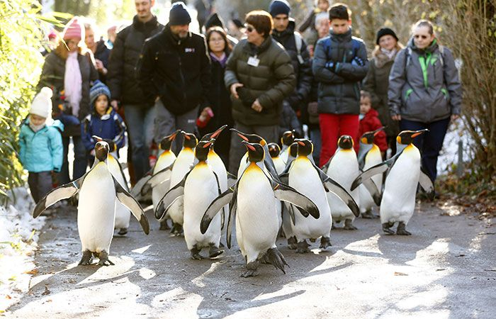 Peoples Walk With Penguins