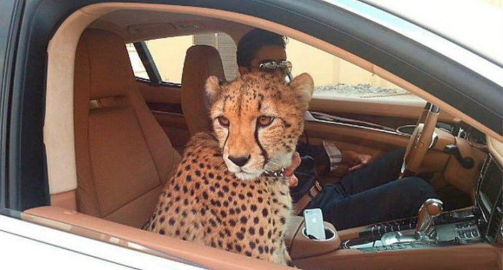 Saudi pets