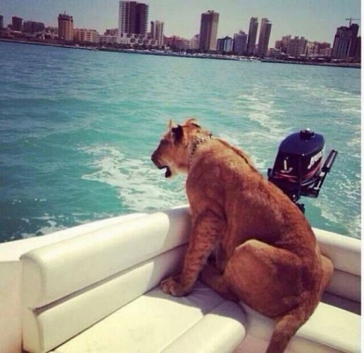Exotic pets saudi