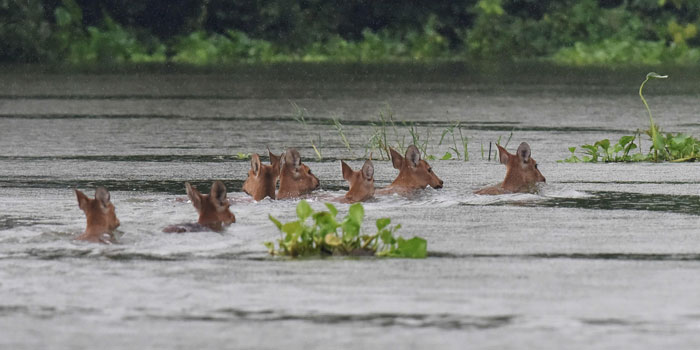 Kaziranga Flood