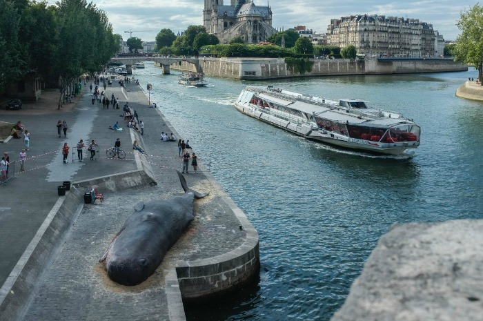 whale structure installed in Paris