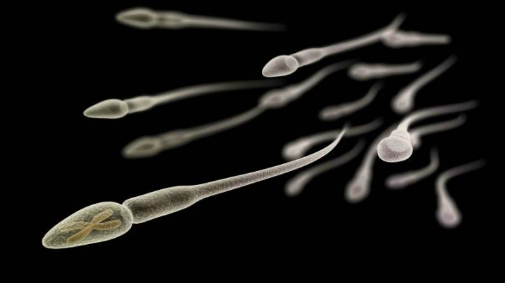The sperm count of men in North America, Europe, Australia and New Zealand has halved in 40 years, according to research warning of fertility risk, though outside experts urged caution about the results.