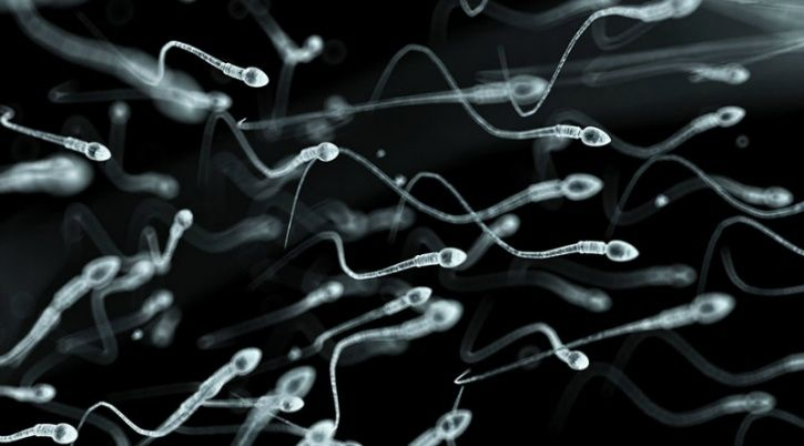 The research team found no significant decline in South America, Asia, and Africa, where fewer studies had been conducted. Apart from fertility risks, reduced sperm count could be an indicator of underlying health problems caused by environmental factors such as pesticide poisoning, or stress, smoking, a poor diet and other lifestyle factors.