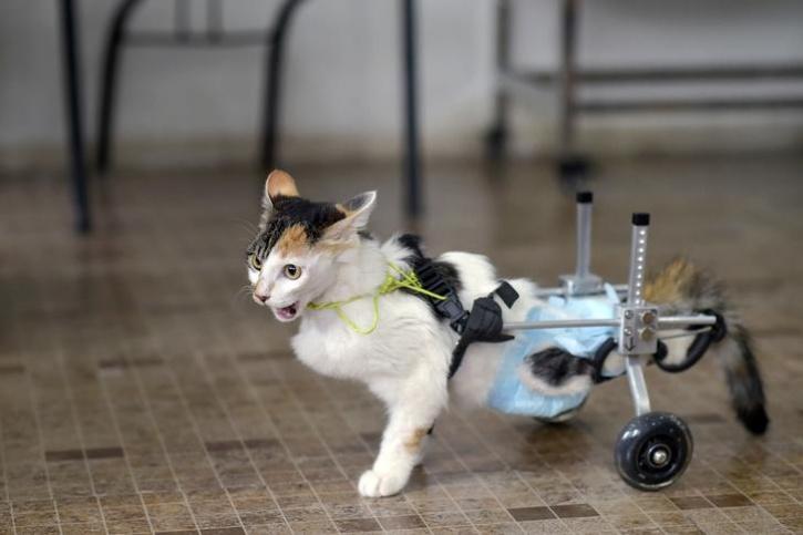 Bionic Animal