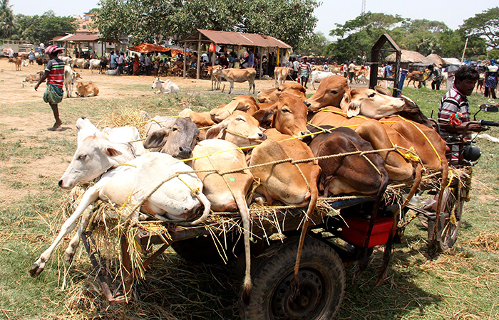 Cattle Trade