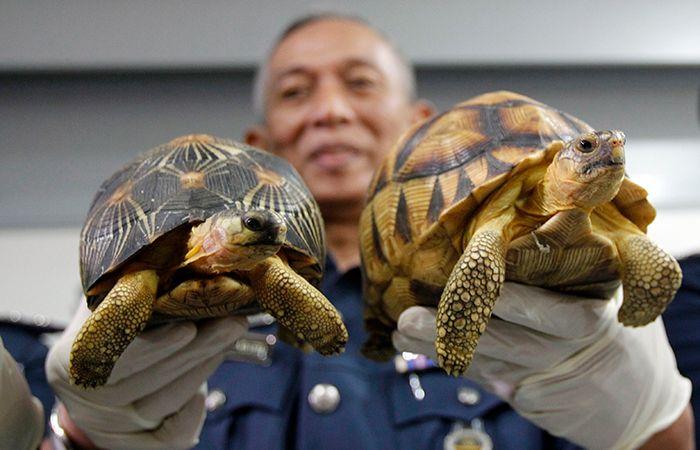 Star Turtles