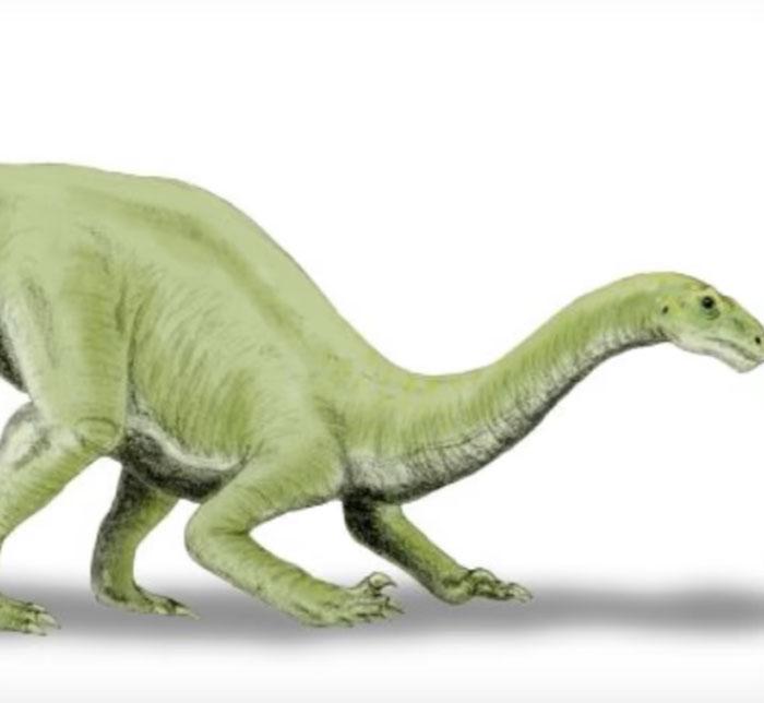 Lamplughsaura