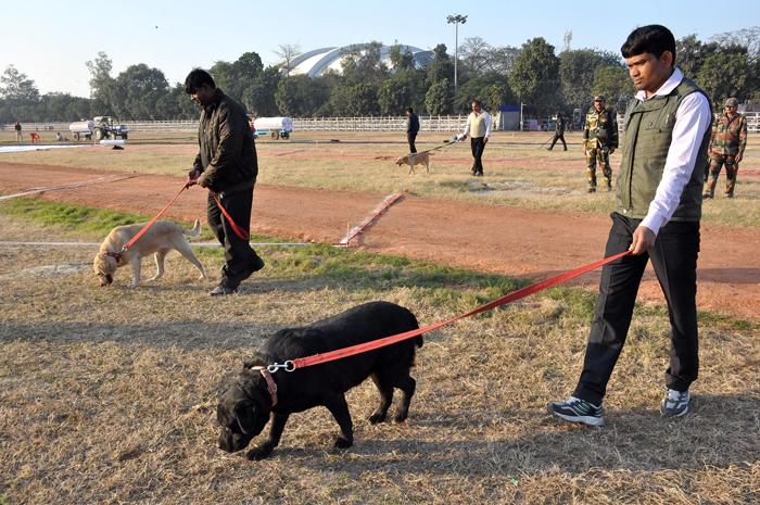 Patriot Dogs