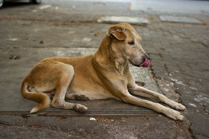 Dogs Eat Up Patient In Madhya Pradesh Govt Hospital