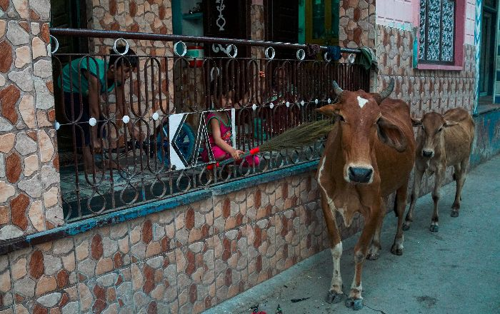 Declare Cow As National Animal