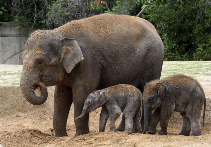 Elephant Dies