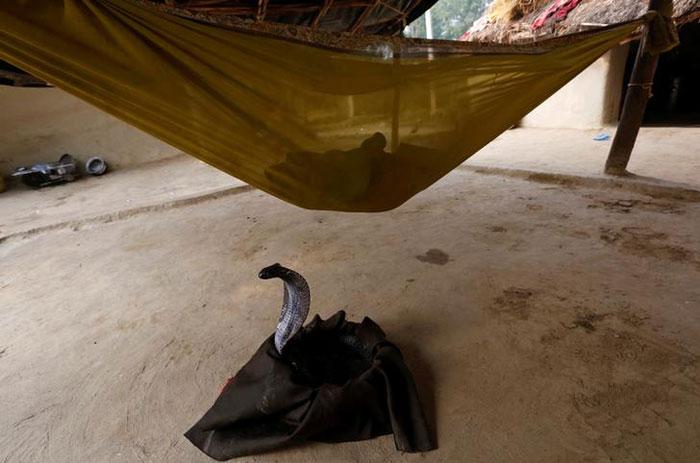 snake charmer in Jogi Dera